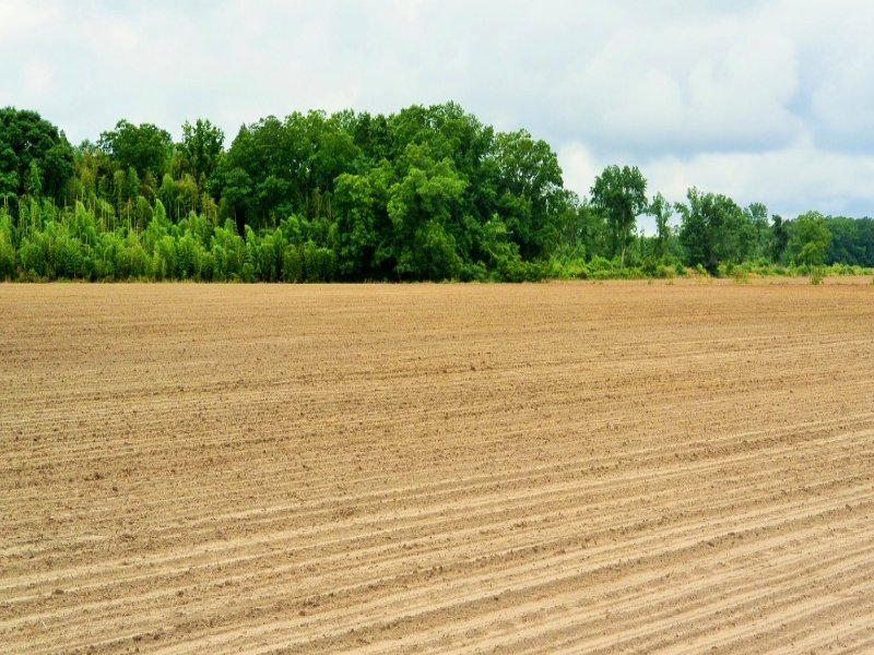 Effingham Agricultural Homesite : Effingham : Florence County : South Carolina