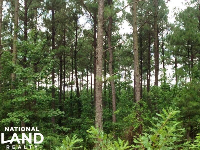 Greensboro Recreational Timber Inve : Greensboro : Greene County : Georgia
