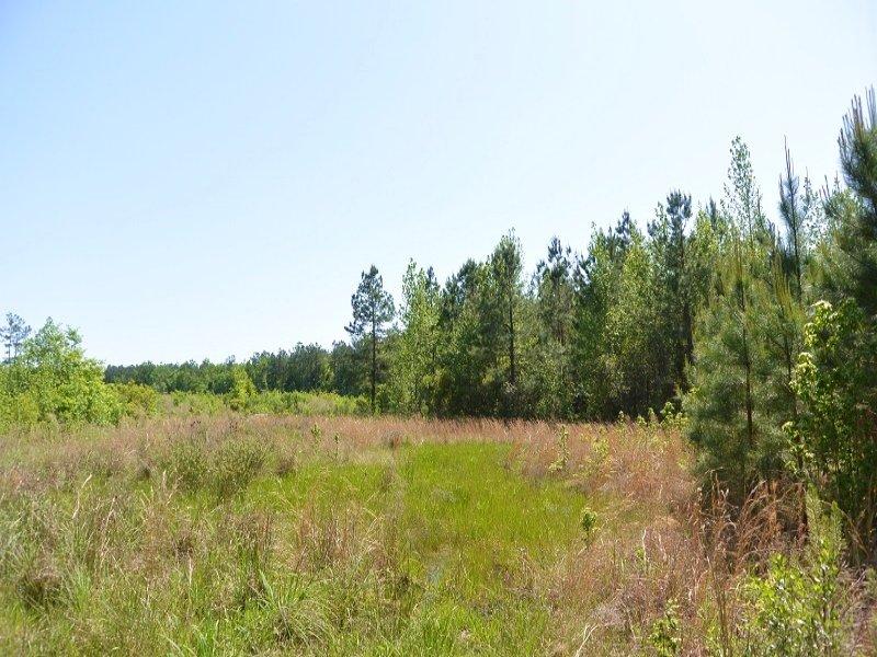 Bonneau Hunting & Recreational Home : Bonneau : Berkeley County : South Carolina