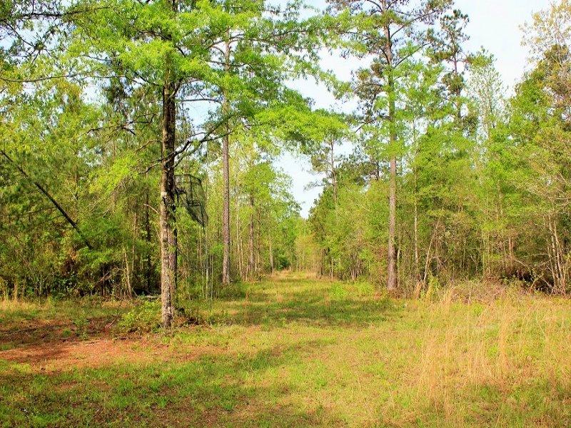 Bonneau Private Homesite : Bonneau : Berkeley County : South Carolina
