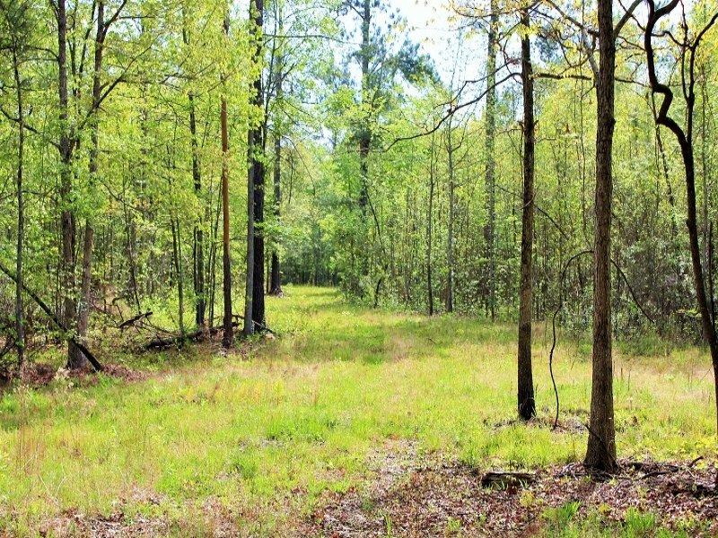 Bonneau 20 Acre Recreational Homesi : Bonneau : Berkeley County : South Carolina