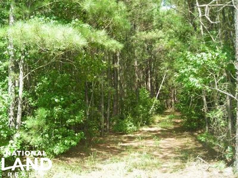 Hunting & Timber Land : Saint Stephen : Berkeley County : South Carolina
