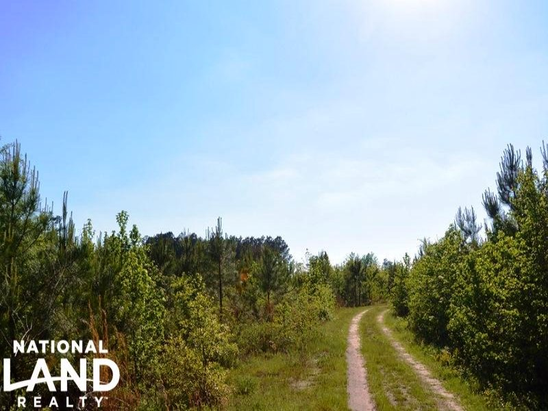 Pine Timber & Recreational Investme : Manning : Clarendon County : South Carolina