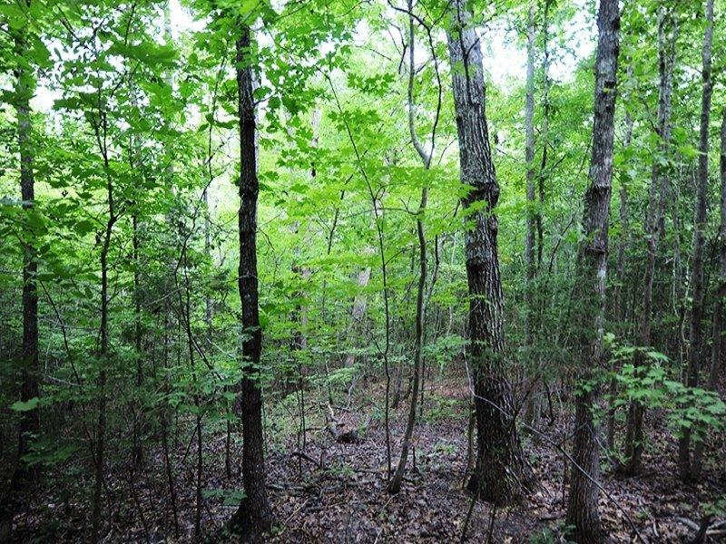 Goldston Home Site : Goldston : Chatham County : North Carolina