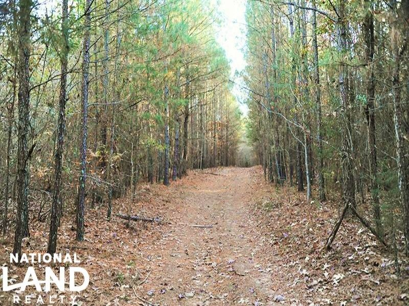 Timber Investment & Hunting Land : Robbins : Moore County : North Carolina