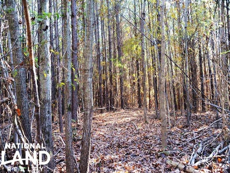 High Falls Hunting & Timber Homesit : High Falls : Moore County : North Carolina