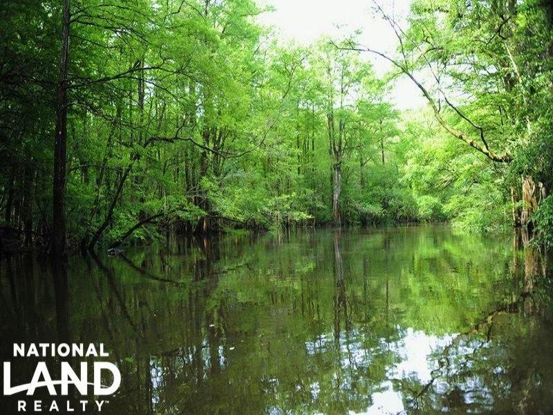 Livingston Creek Hunting & Timber I : Riegelwood : Columbus County : North Carolina