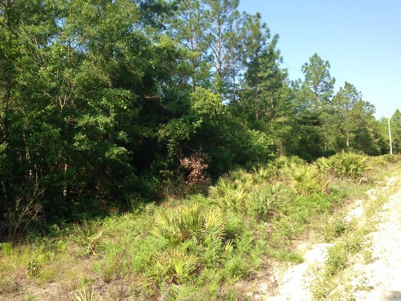 Screven Recreational Home Site : Screven : Wayne County : Georgia