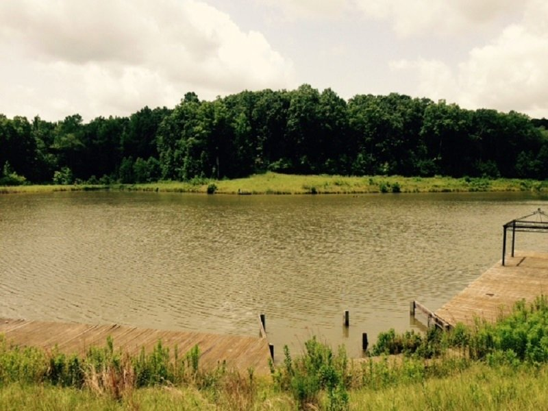 Horse Creek Tract : Elrod : Tuscaloosa County : Alabama