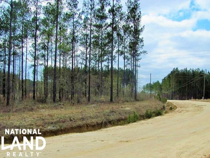 37.78 Acre Timberland Investment : Lyons : Toombs County : Georgia