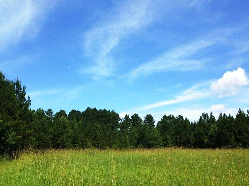 Turn-key Hunting Tract : Darien : McIntosh County : Georgia