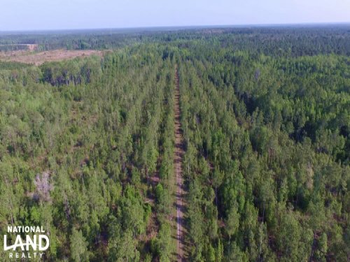 Recreational Timber Investment In N : Yulee : Nassau County : Florida