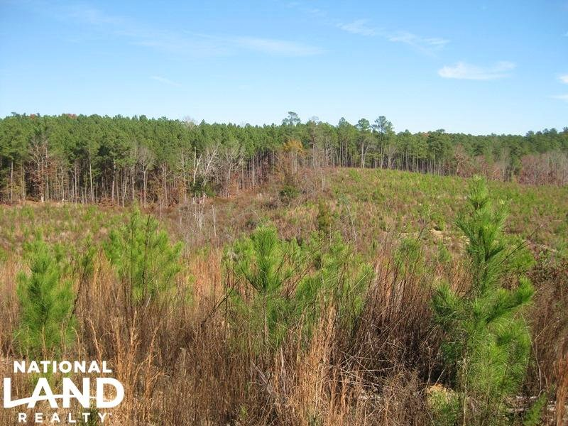 Newberry Hunting & Timberland Tract : Maybinton : Newberry County : South Carolina