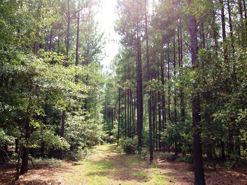 Private Hunting Estate : Varnville : Hampton County : South Carolina