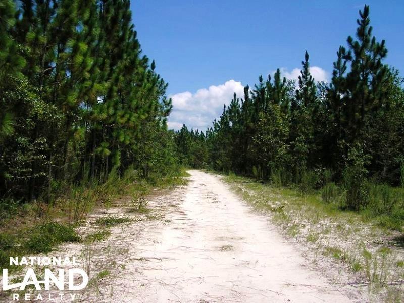 Penholloway Creek Plantation : Gardi : Wayne County : Georgia