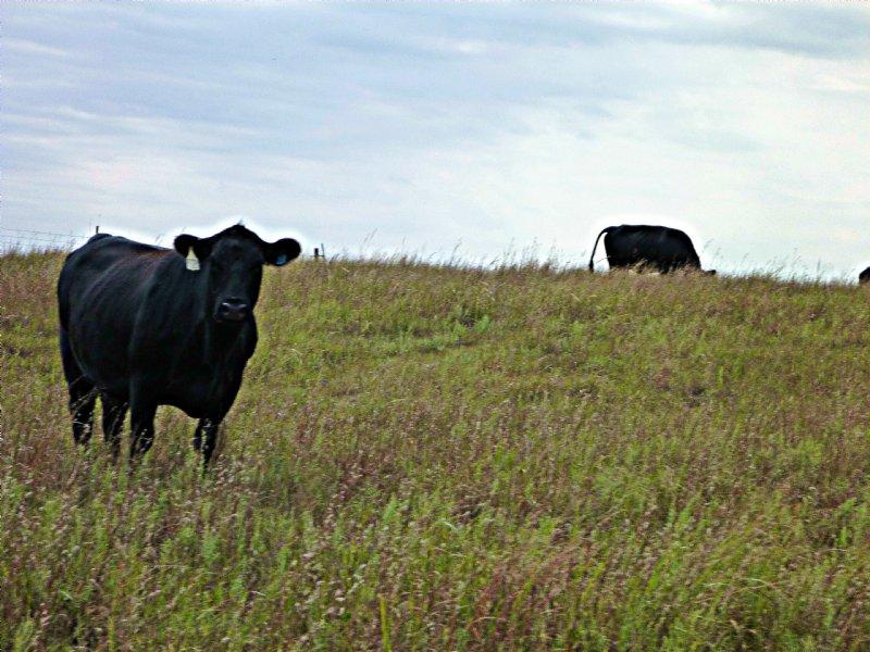 Sandstone Prairie Ranch : Steele City : Jefferson County : Nebraska