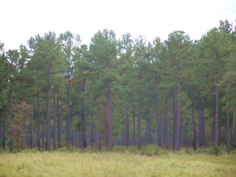 Rock Creek Plantation : Newton : Baker County : Georgia