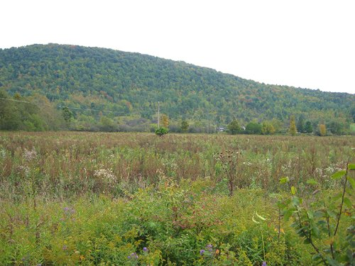 Farmland Good Soils 19 Acres : Orange : Schuyler County : New York