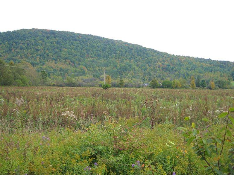 Farmland Good Soils 19 Acres : Orange : Schuyler County : New York