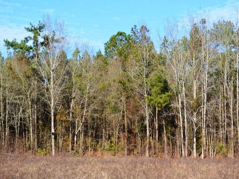 Coward Recreational Homesite : Coward : Florence County : South Carolina