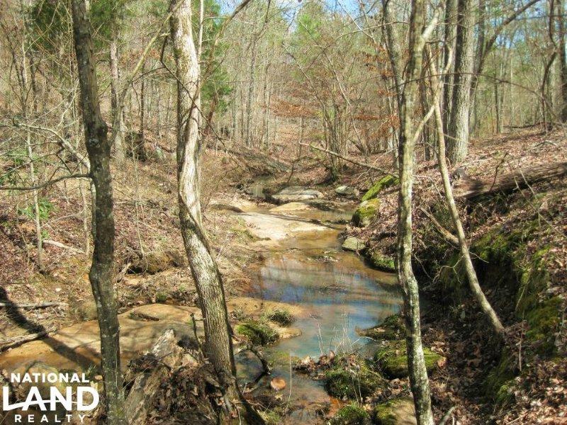 National Forest Hunting Land : Carlisle : Union County : South Carolina