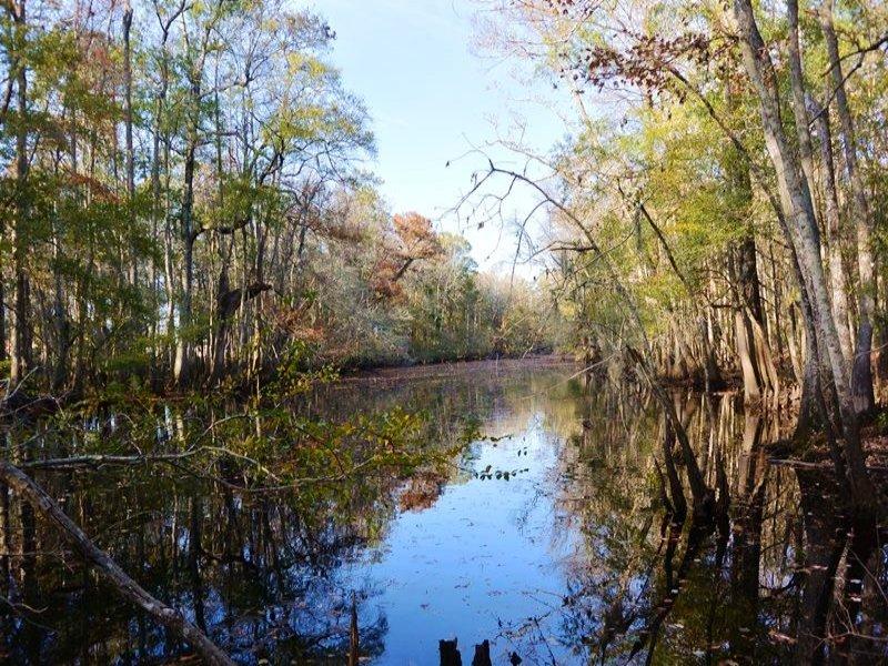 Lake Swamp Recreational Land : Johnsonville : Florence County : South Carolina