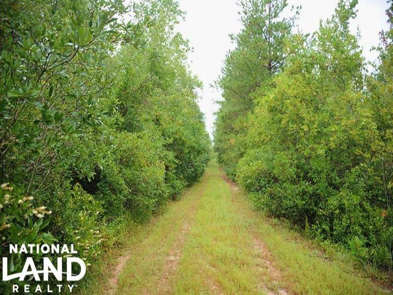Atkinson Hunting & Timberland Tract : Atkinson : Pender County : North Carolina