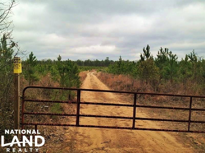76 Acre Long-term Timber Investment : Sparta : Hancock County : Georgia