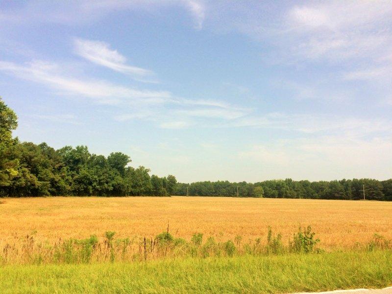Bowman Country Homesite Or Mini-far : Bowman : Orangeburg County : South Carolina