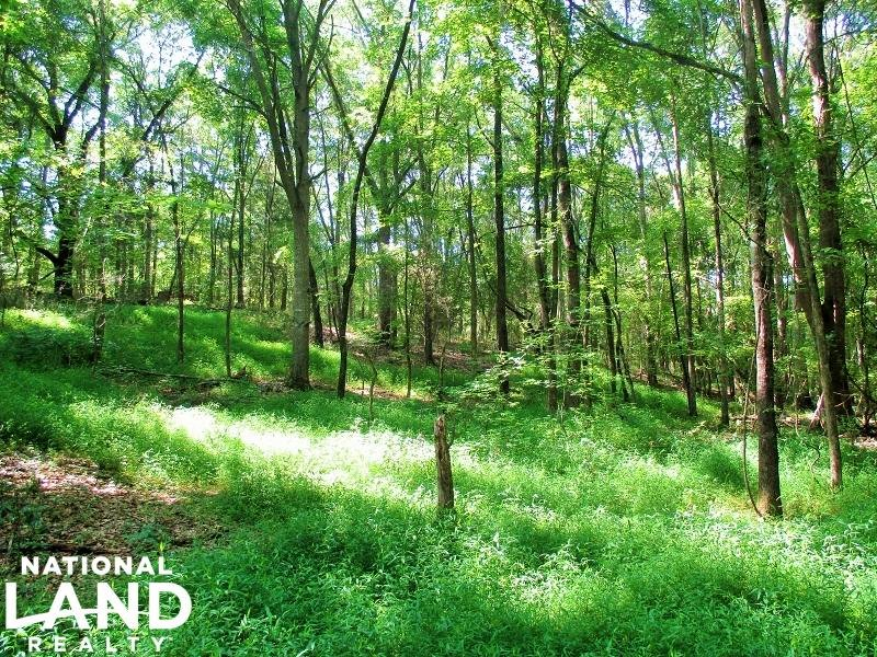 13.25 Acre Wooded Homesite : Honea Path : Laurens County : South Carolina