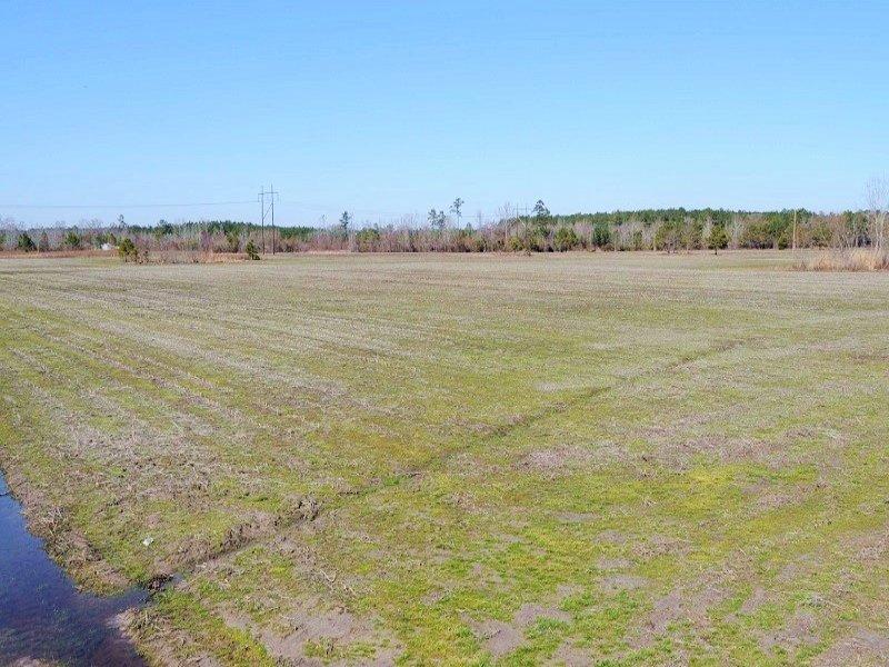 Sardis Agricultural Homesite : Sardis : Florence County : South Carolina