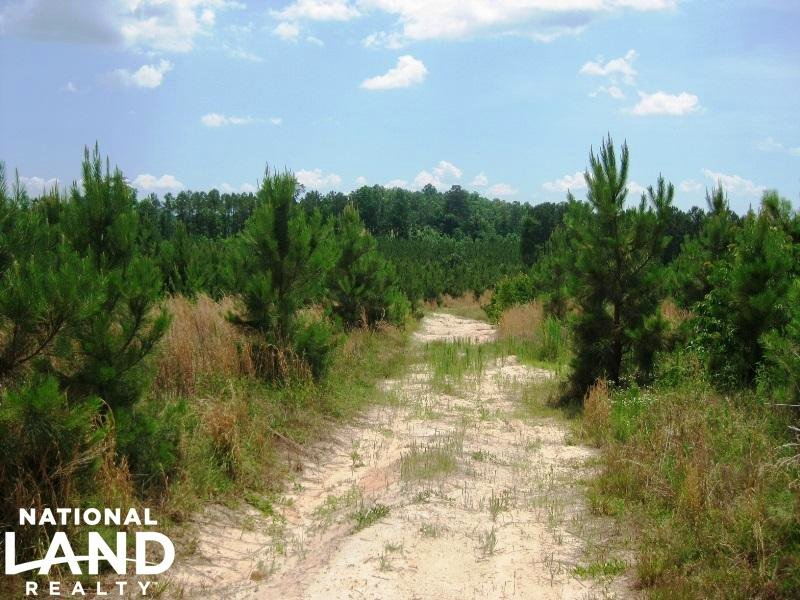 Winnsboro Recreational Timber Tract : Winnsboro : Fairfield County : South Carolina