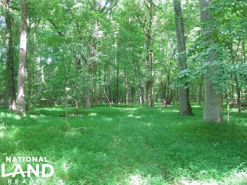 Fairfield Timber Investment : Carlisle : Fairfield County : South Carolina