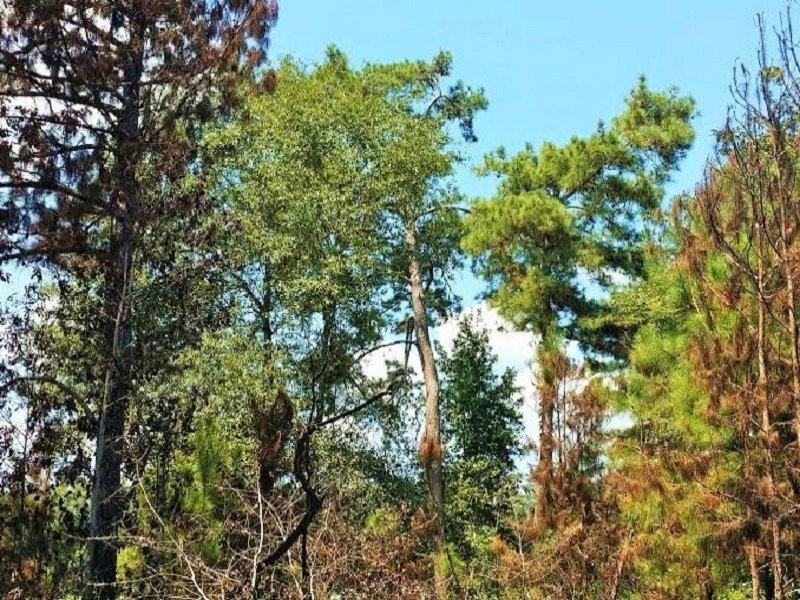 Shepherd Recreational Timberland : Shepherd : San Jacinto County : Texas