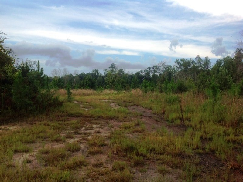 Recreational Timberland : Gateswood : Baldwin County : Alabama