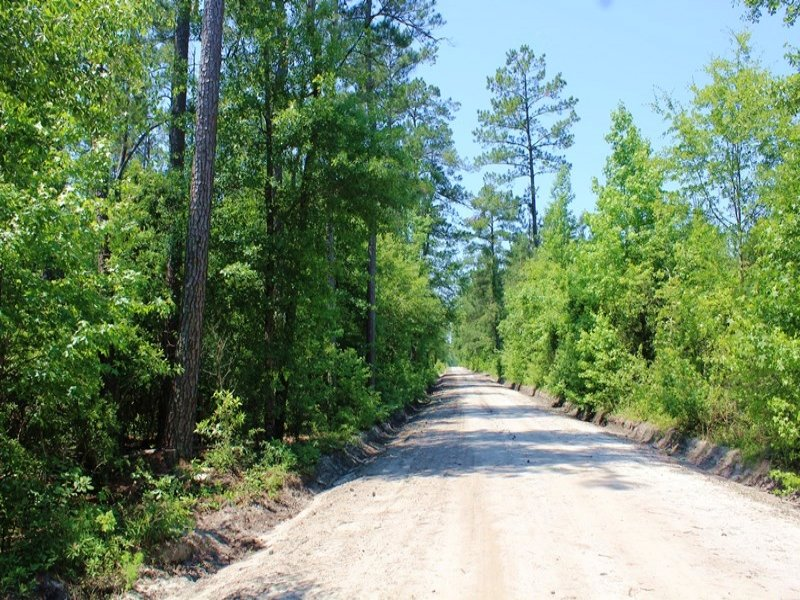 469 Acre Timber Investment : Round O : Colleton County : South Carolina