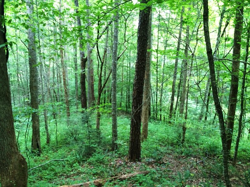 Land Investment/development Propert : Pittman Center : Sevier County : Tennessee
