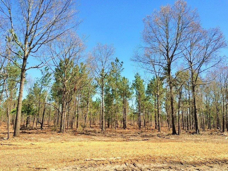 Camden Large Acre Recreational Esta : Camden : Kershaw County : South Carolina