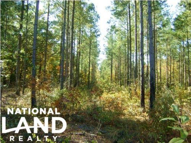 Swansea Hunting Land : Swansea : Lexington County : South Carolina