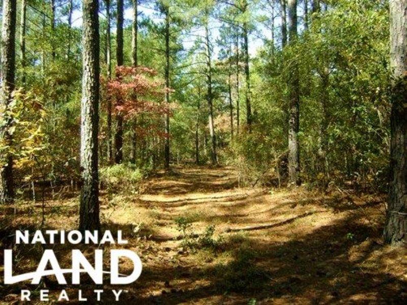 53 Acre Swansea Hunting Land : Swansea : Lexington County : South Carolina