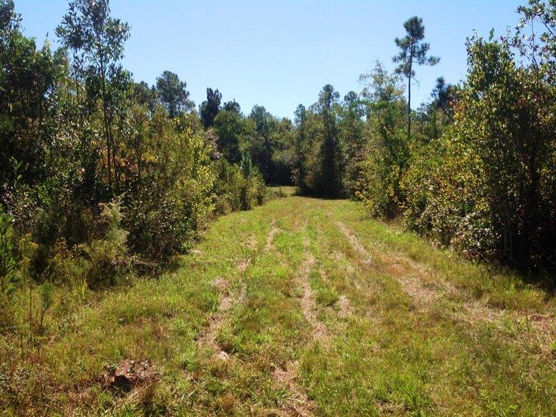 Recreational Investment : Bay Minette : Baldwin County : Alabama