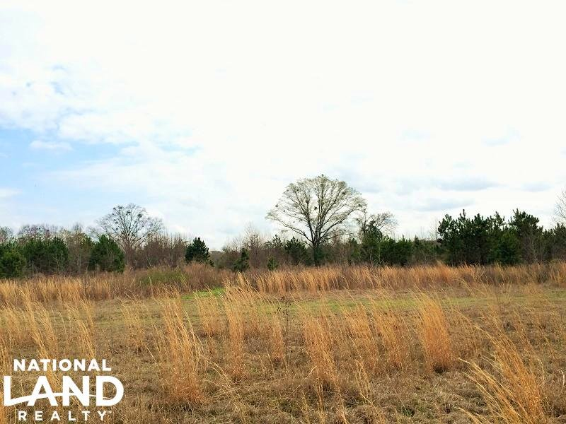 38.6 Acre Private Recreational Land : Midway : Bullock County : Alabama