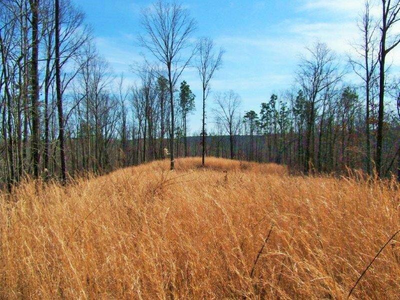 Recreational Timber Tract : Sylacauga : Coosa County : Alabama