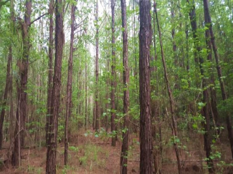 40 Acre Recreational Hunting & Timb : Rutledge : Crenshaw County : Alabama