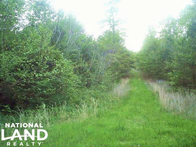 120 Acre Large Acre Recreational Tr : Collinsville : Dekalb County : Alabama