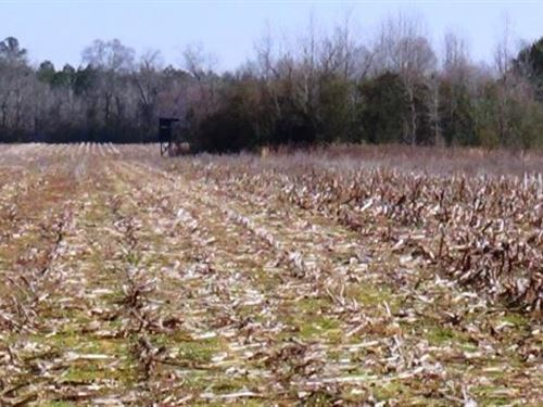 Farming & Hunting Land : Aliceville : Pickens County : Alabama