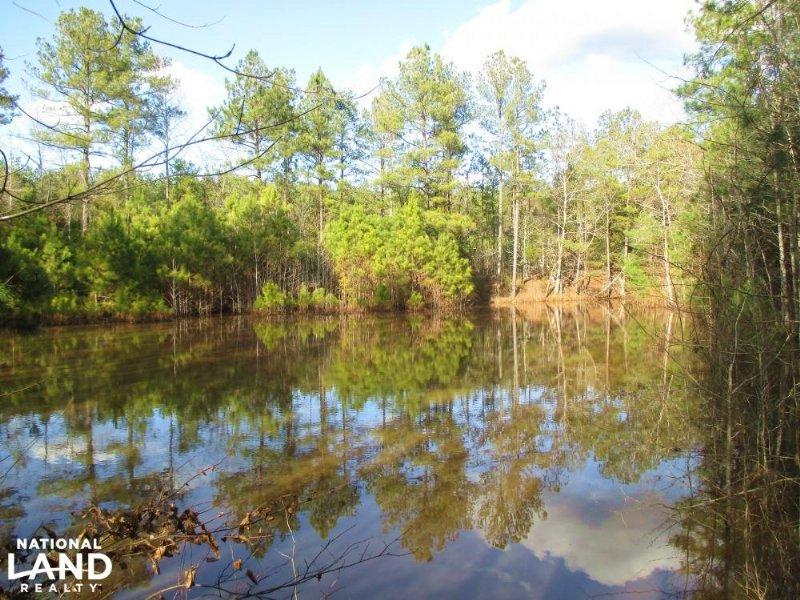 Clinton Hunting & Timber Land : Clinton : Laurens County : South Carolina