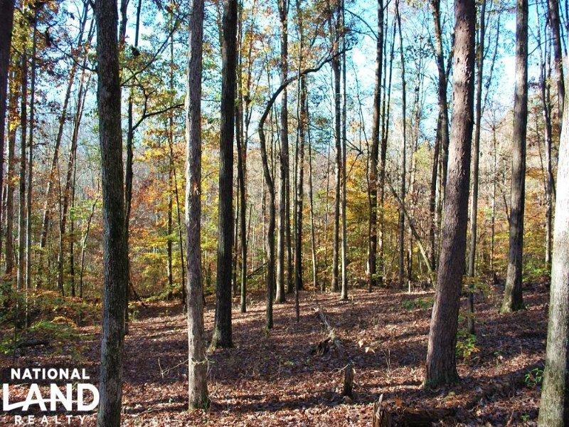 Easley Large Acre Homesite : Easley : Pickens County : South Carolina