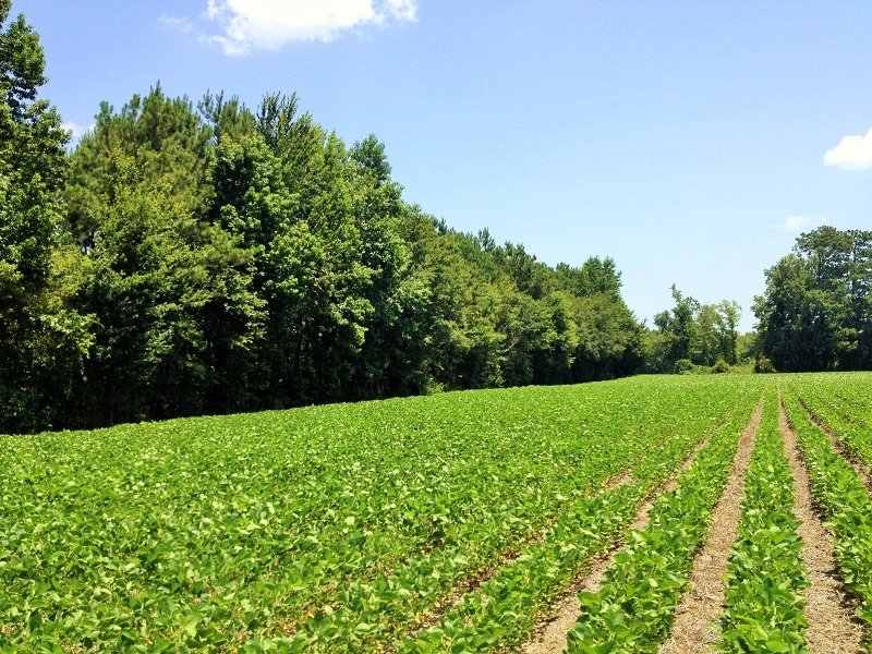 Green Sea Agricultural Homesite : Green Sea : Horry County : South Carolina
