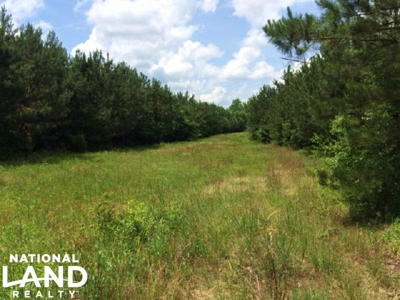 96 Acre Timber & Hunting Tract : Fayette : Fayette County : Alabama